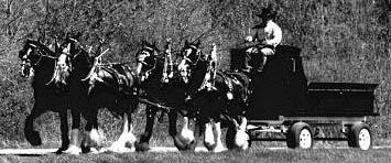 Книги о лошади, составленной по третьему немецкому изданию Das Buch vom Pferde